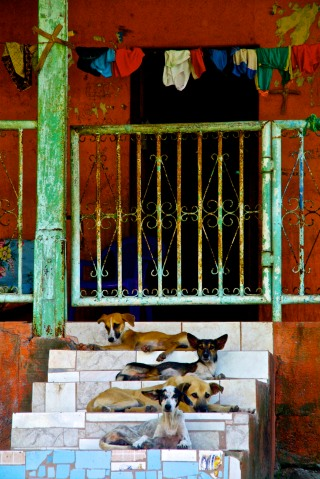 Photo Journalism Friday: Dog Days of Summer
