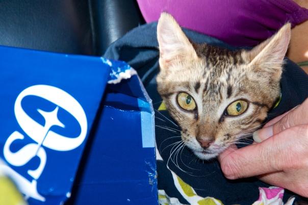 Kitty Rescue