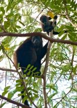 Flora & Fauna of Nicarauga