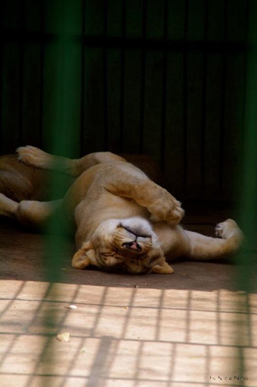 Nicaragua National Zoo