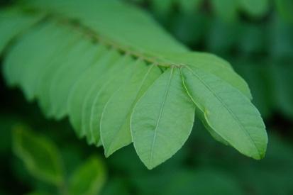 Snapshots: Flora & Fauna of Nicaragua